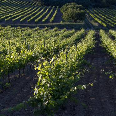 Les sentiers viticoles – Pierrevert