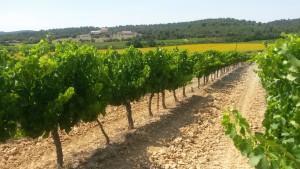 vignes petra viridis pierrevert