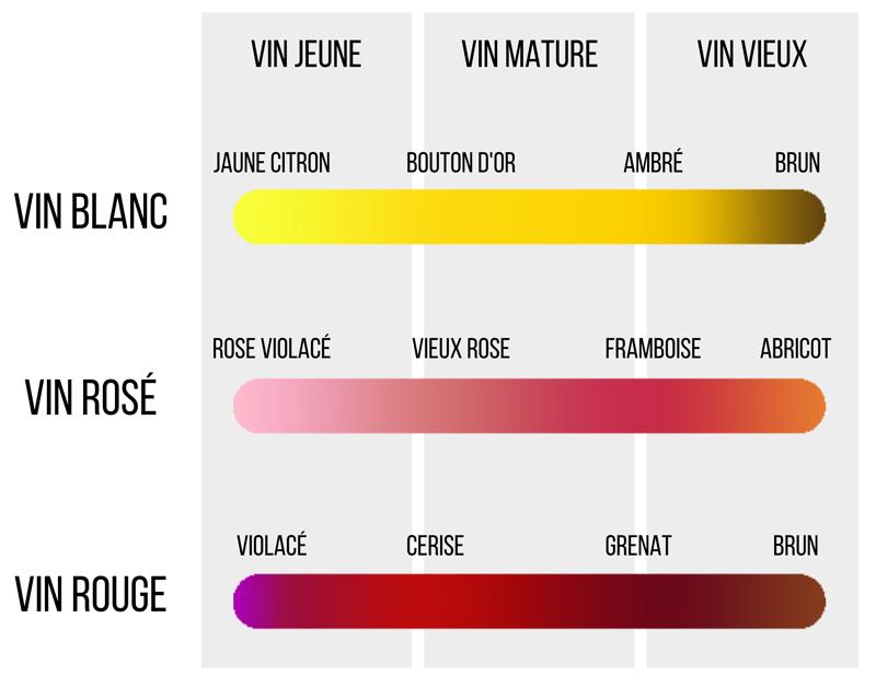 couleurs vins dégradé maturité